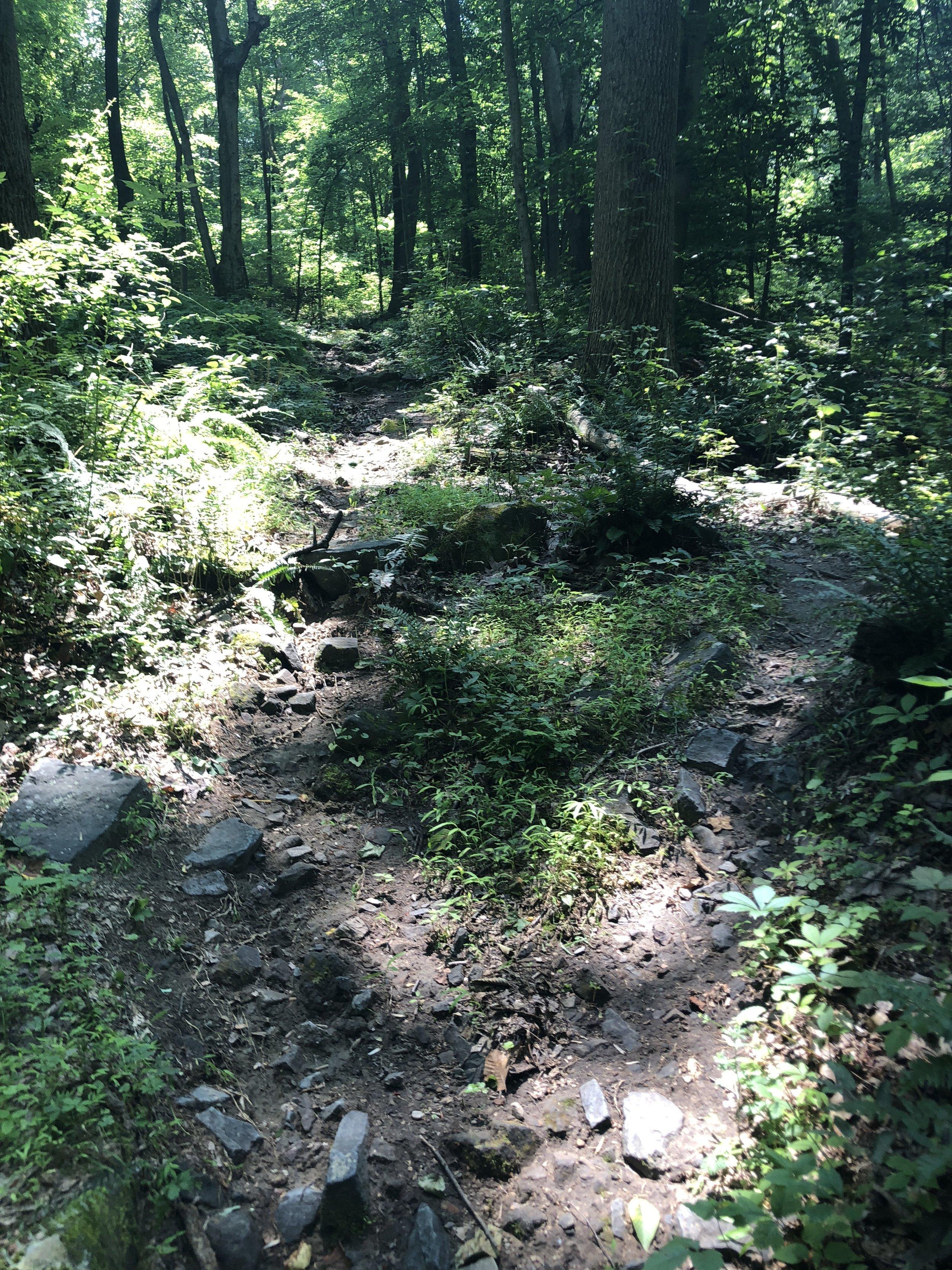 Steep mountain bike trail uphill with ROCKS!