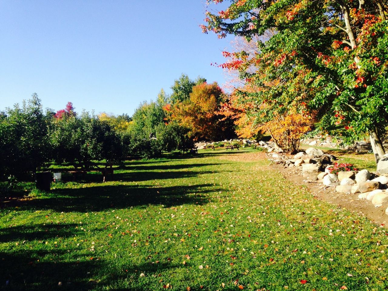 Our idyllic picnic area. Enjoy some of New England's best.