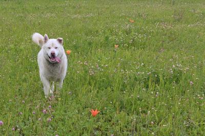 Thunder among the Lilies. OR Dog among the Tigers. :-)