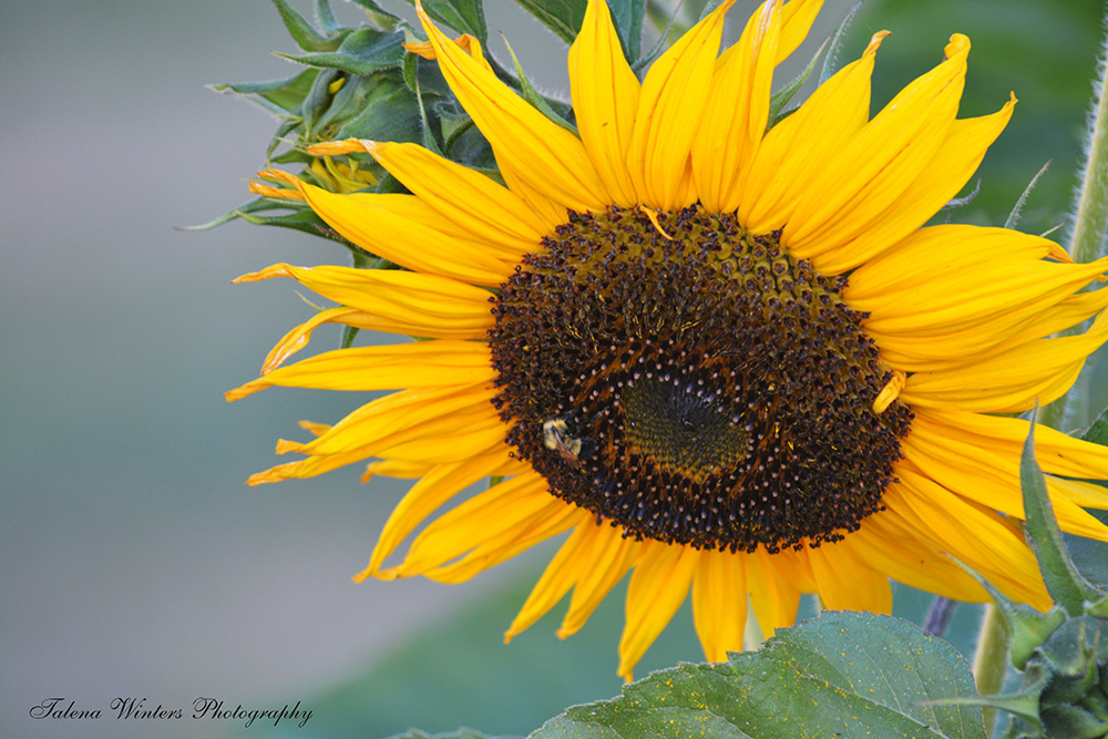 I did learn how to grow a sunflower eventually...