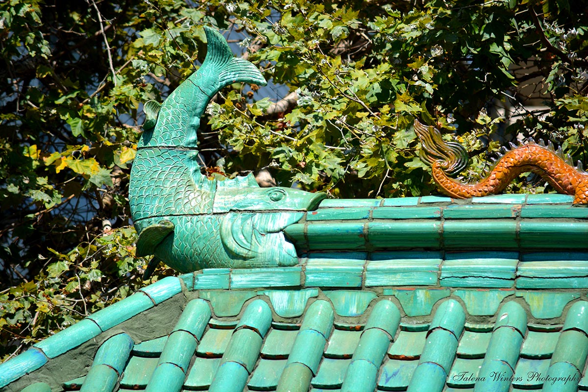 Fish on the Dragon Gate