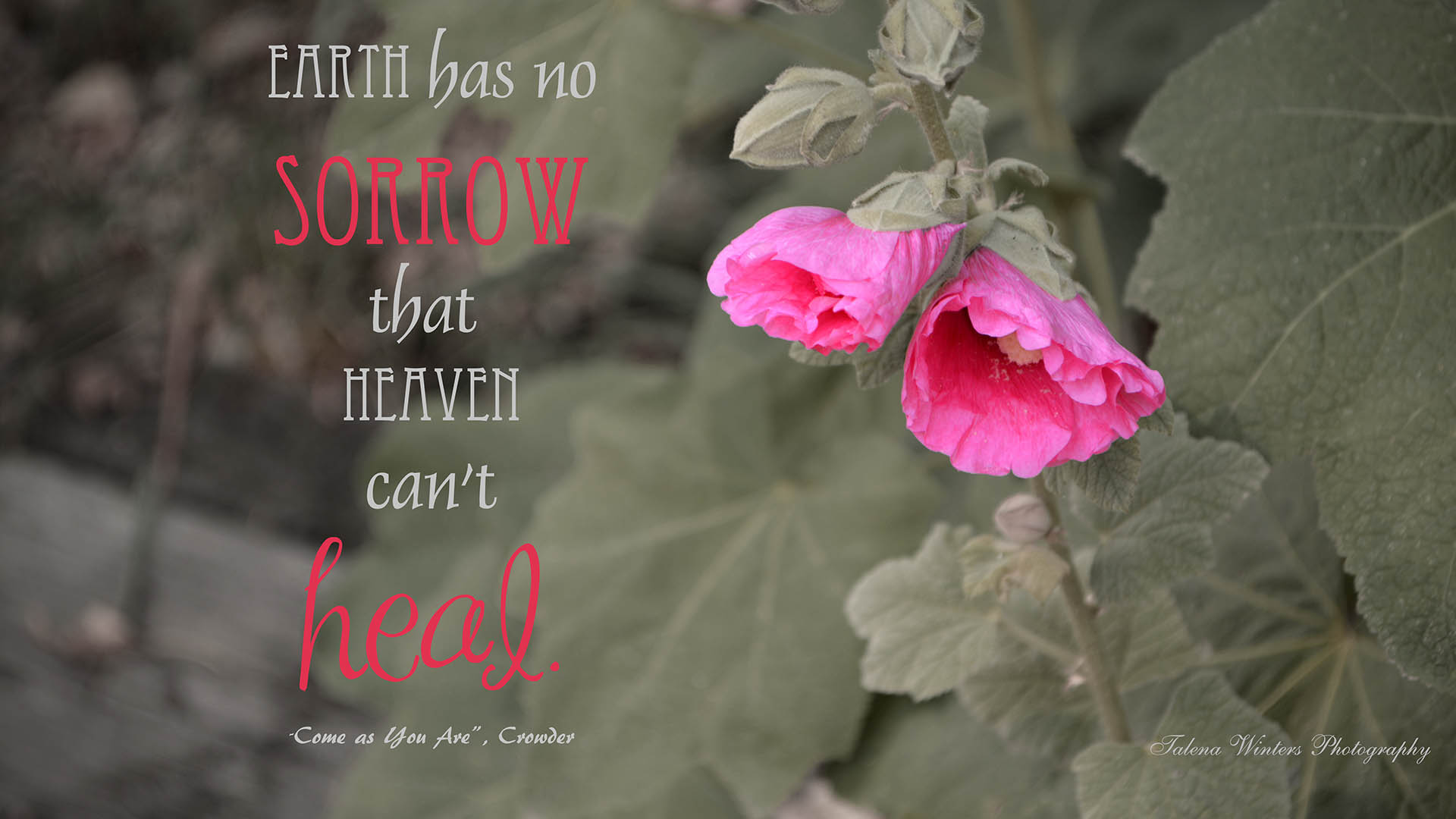 """Earth has no sorrow that heaven can't heal"" quote with Pink Hollyhock desktop wallpaper by Talena Winters. www.talenawinters.com"