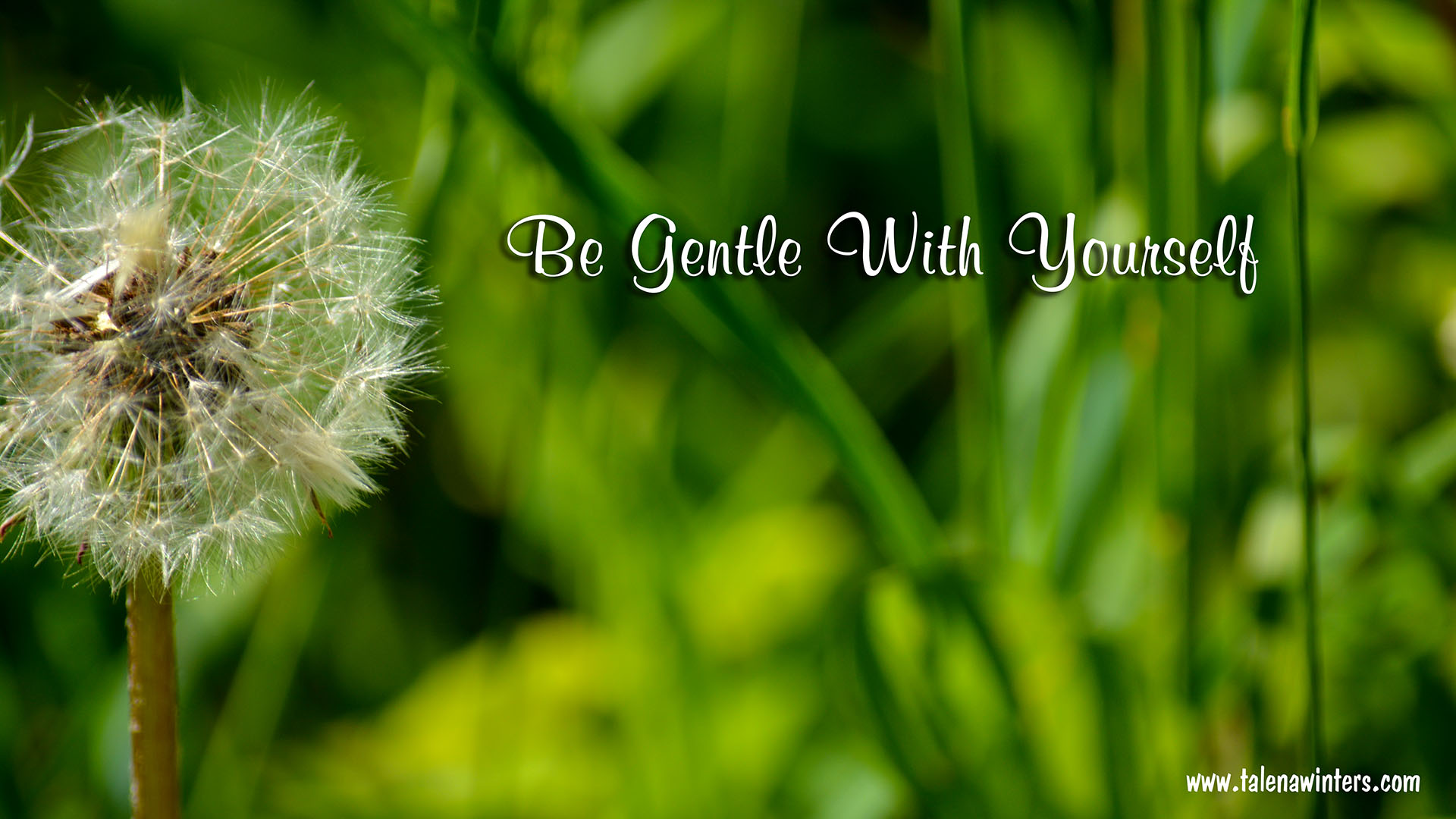 """Be Gentle With Yourself"" desktop wallpaper, 1920x1080 resolution. Find more free inspirational desktop wallpapers at  www.talenawinters.com/desktop-wallpapers ."