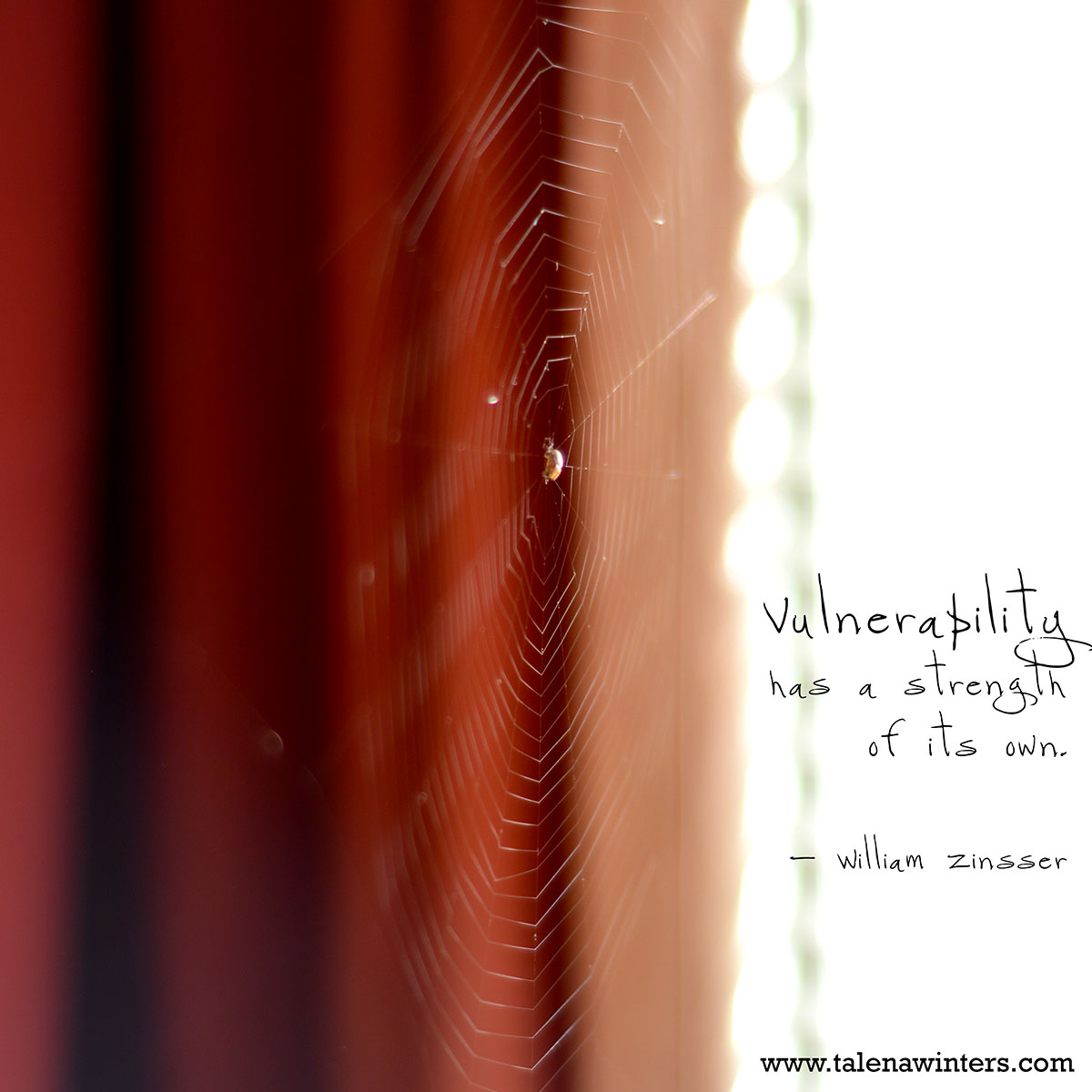 """Vulnerability has a strength of its own."" - William Zinsser. Spider on its web in the slatted sunlight of my front window."