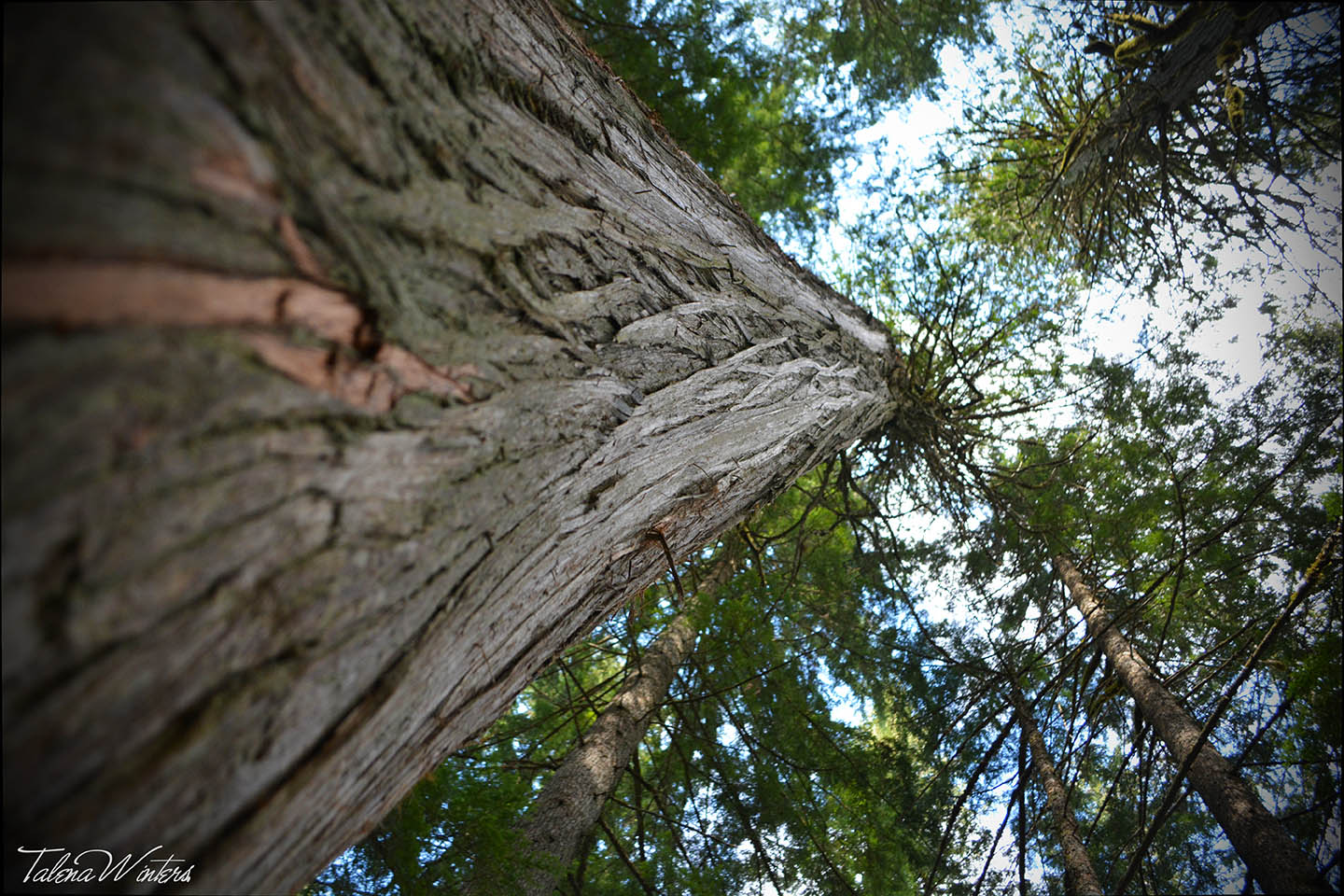 A new perspective at the Giant Cedars Boardwalk near Revelstoke, BC.