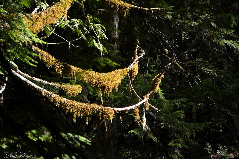 Beautiful moss.