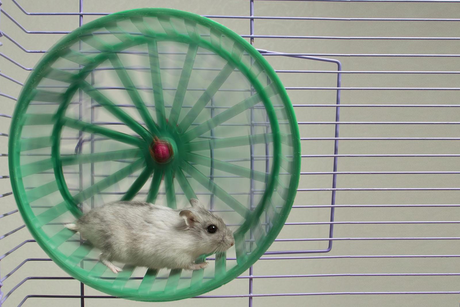 Photo courtesy of  123rf.com .