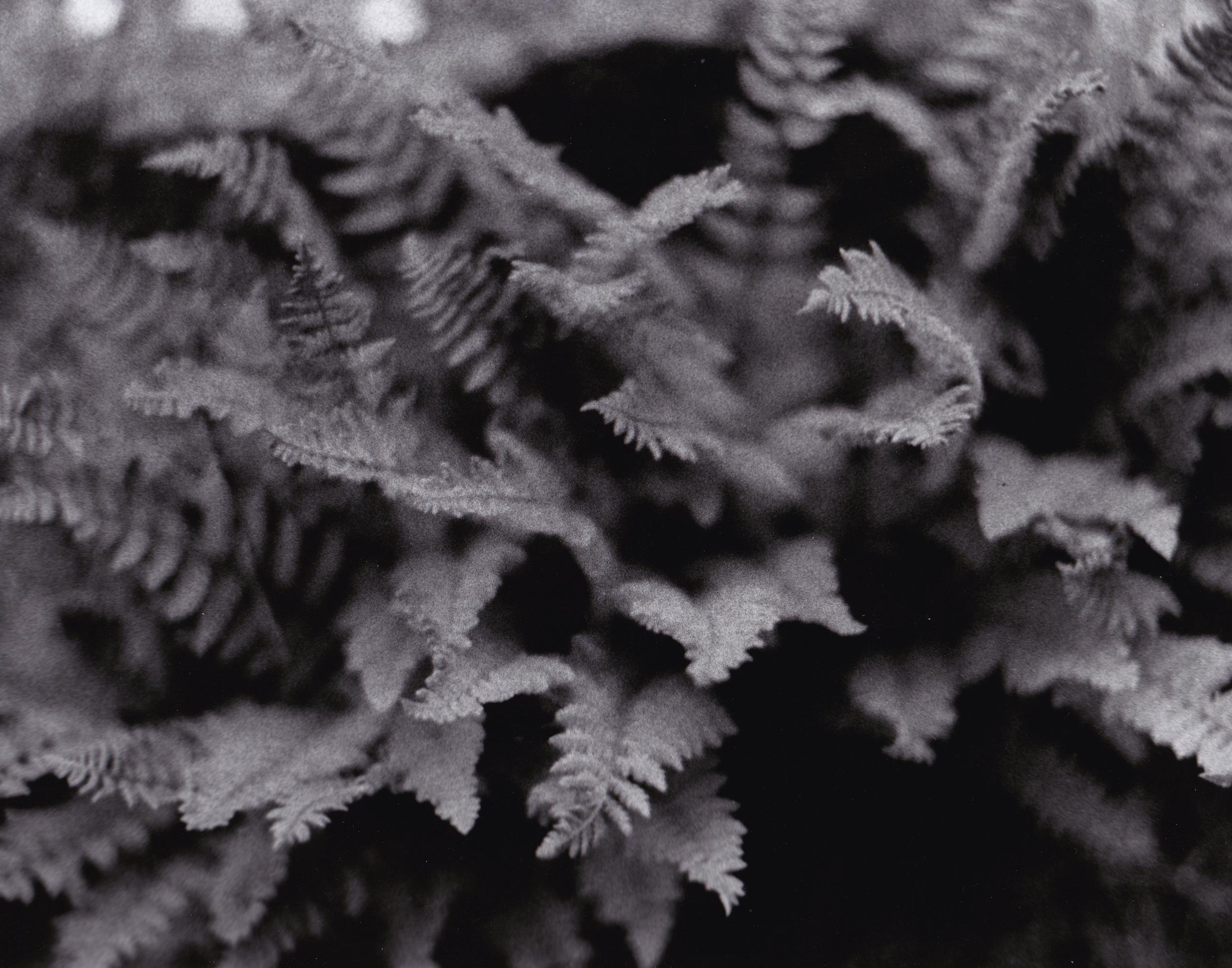 Ferns Film Photograph