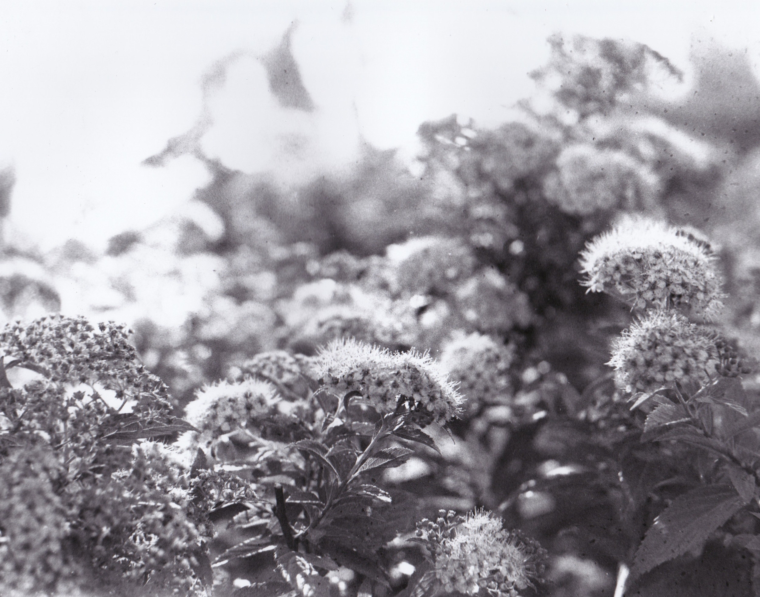 Floral Shrub Film Photograph