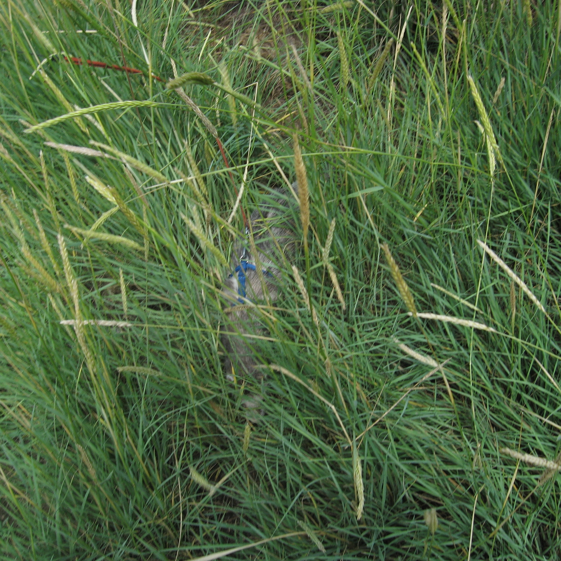 Duke wanders off the path into the tall grass and getshimself lost. He runs into some trouble in this tall grass. You can read more about that in chapter 3.