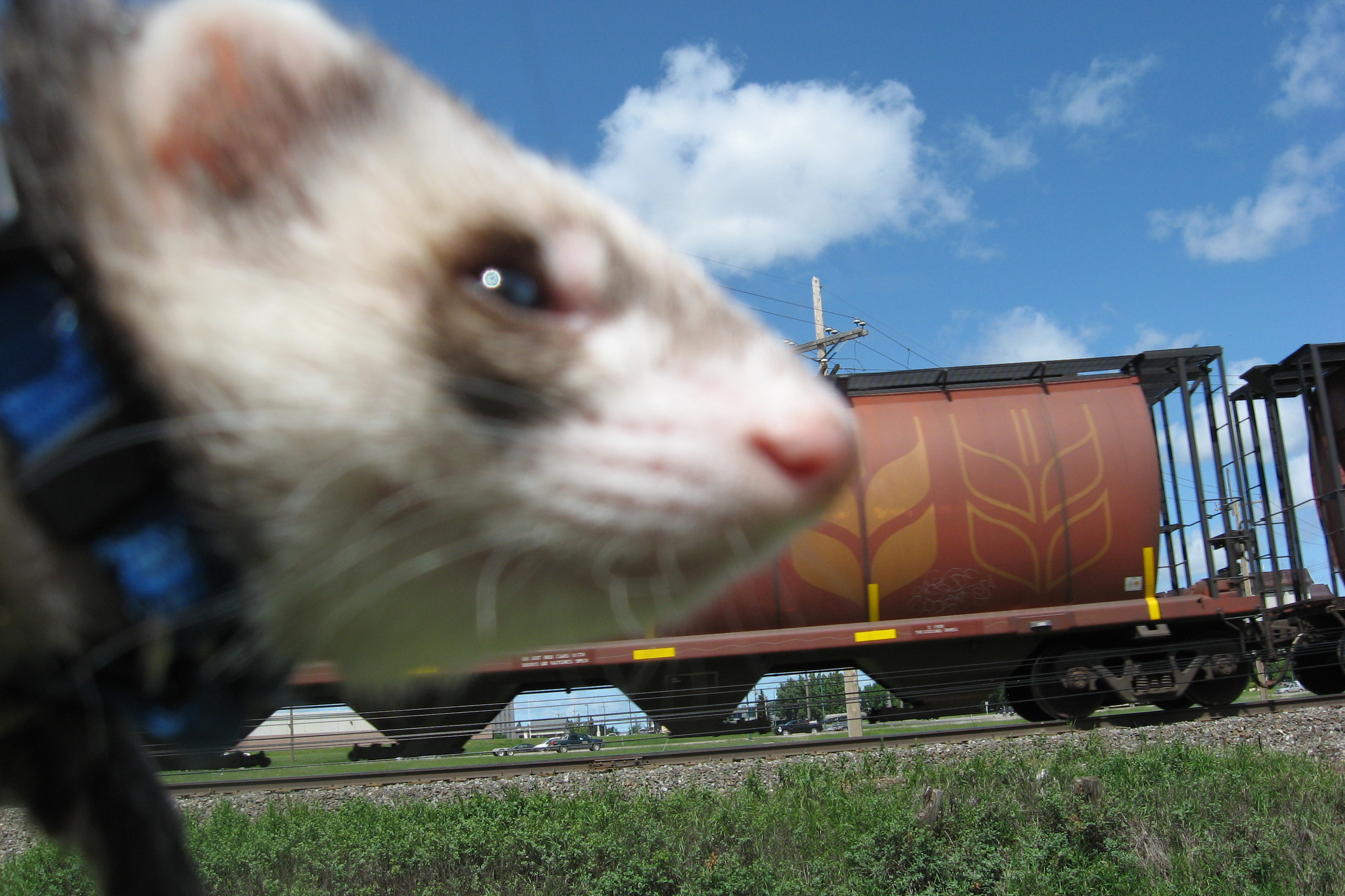 Duke was not happy to return to the train scene for this picture. If you have not read his book yet, you will have to buy a copy from the shop tofind out why.