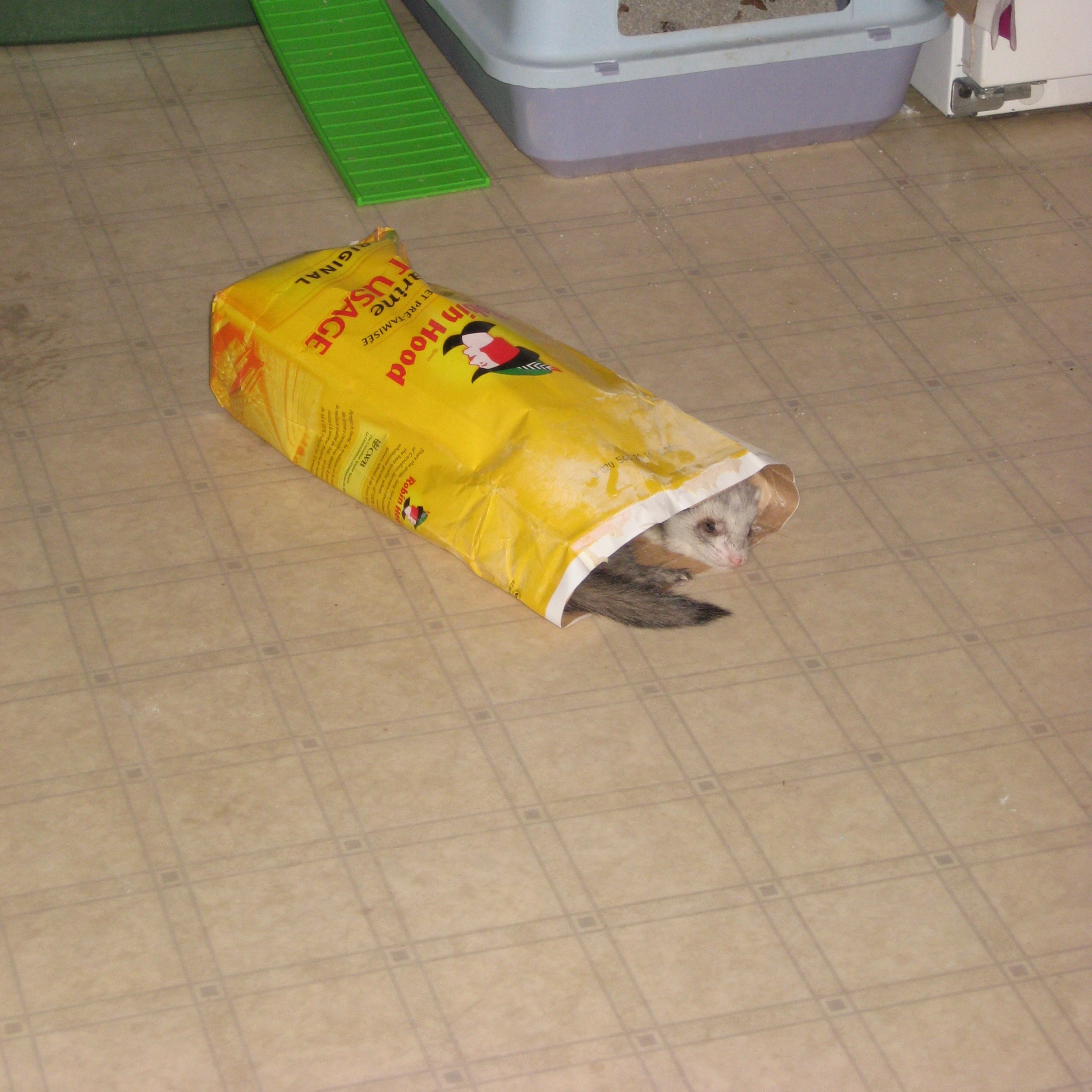 Duke discovers that his caregiver was recording him getting into trouble and posting it on YouTube. Click on the video page to see for yourself. He's so embarrassed that he curls up in an empty bag of flour for a nap, hoping to gain sympathy points.