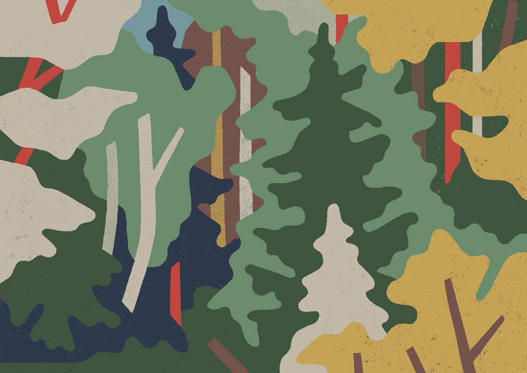 Antra-Svarcs-Forest-in-Ligatne-1080.jpg