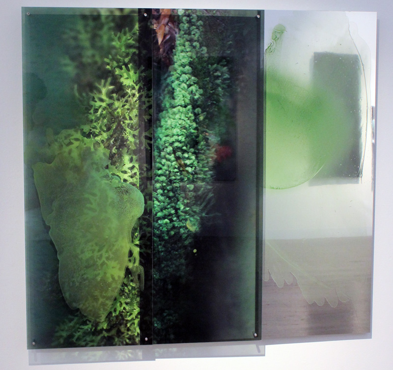 JANET LAURENCE    Chlorophyll Collapse (A) (in the Tarkine, Tasmania)  2012