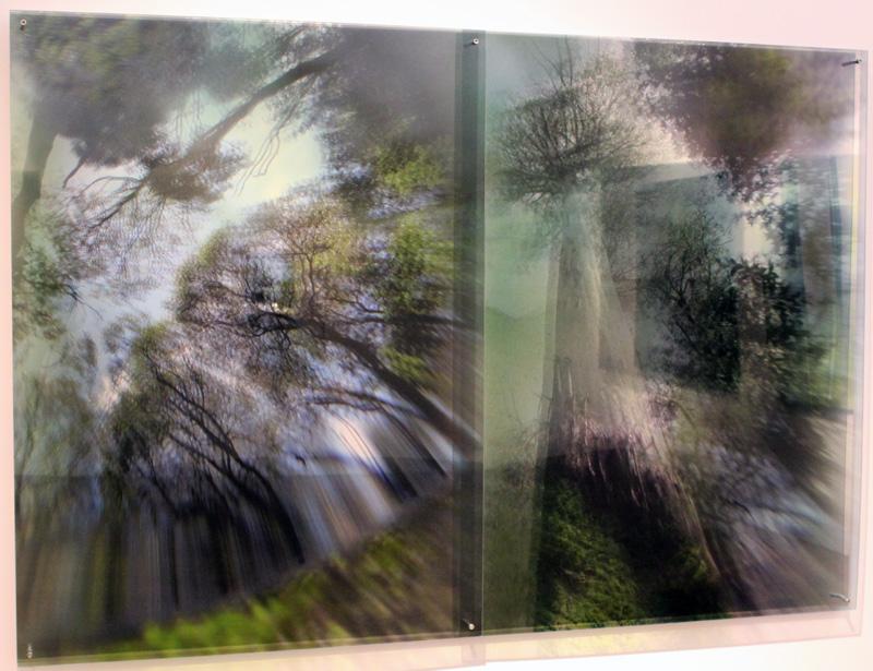 JANET LAURENCE    Eucalyptus Regnans (Felling Forest Giants)  2012