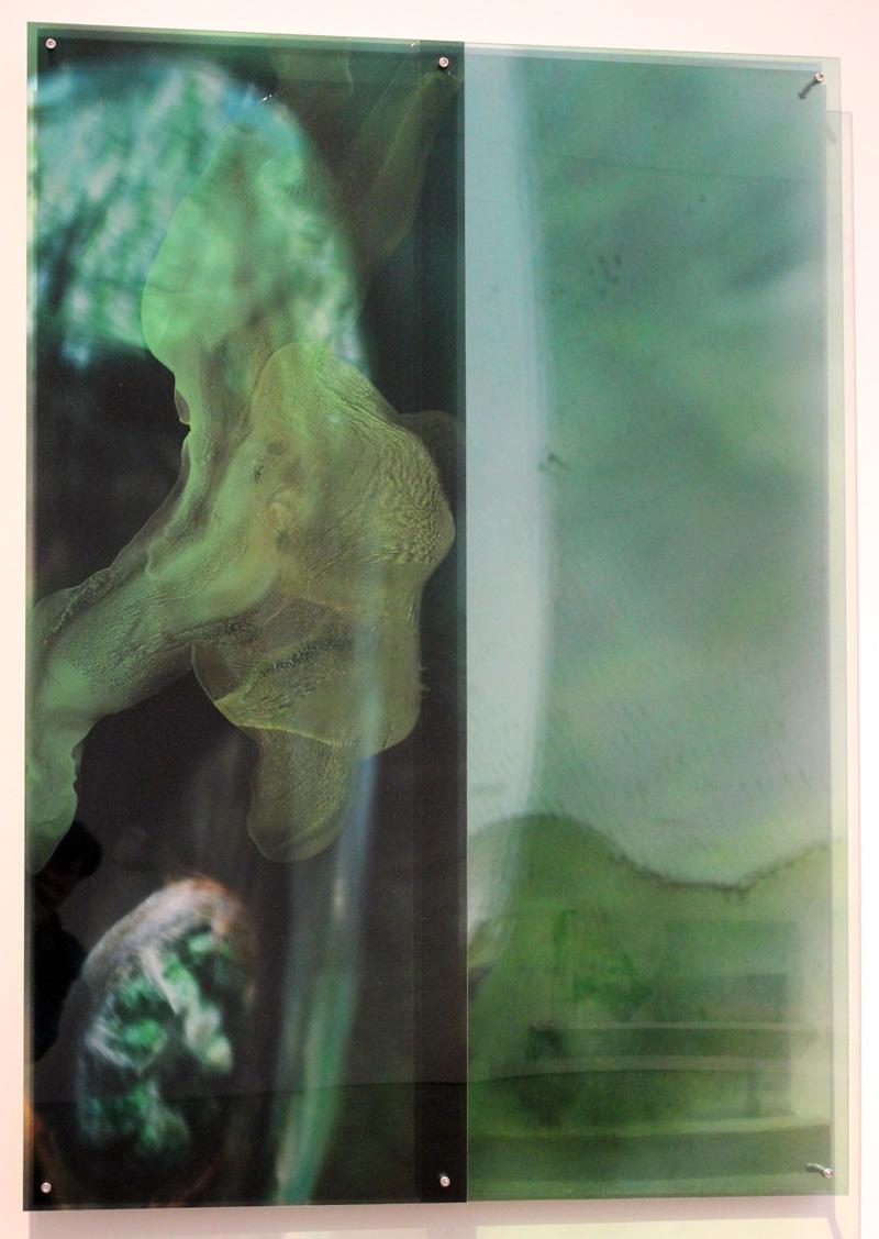 JANET LAURENCE    Dark Glass #2 (the Tarkine, Tasmania)  2012