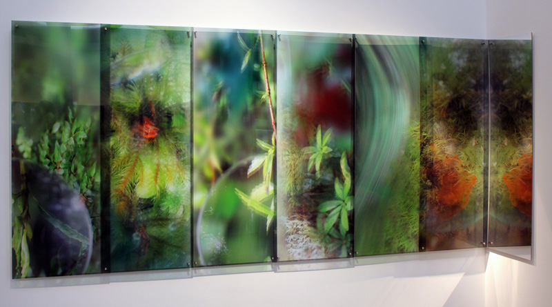 JANET LAURENCE    What a Plant Knows (the Tarkine, Tasmania)  2012