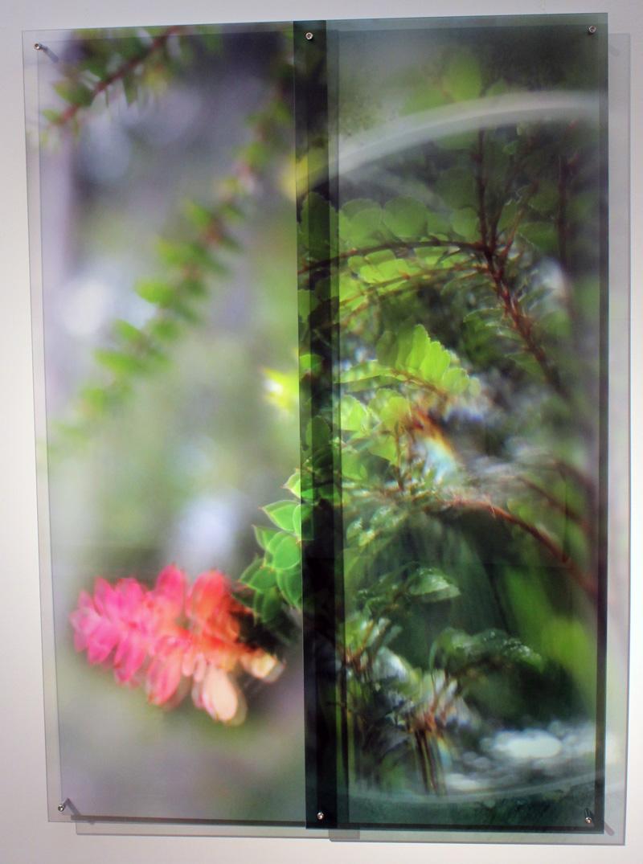 JANET LAURENCE    Desire Persists (the Tarkine, Tasmania)  2012
