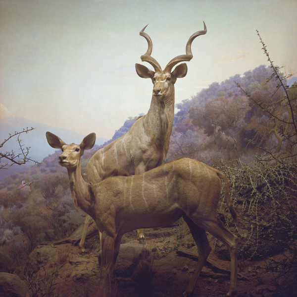 ANNE ZAHALKA     Kudos Hunter  2006/2007 Type C Photograph edition of 10   80 x 80 cm