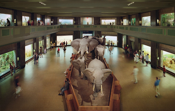 ANNE ZAHALKA     American Natural History Museum, New York  2007 Type C Photograph edition of 3 115 x 182 cm