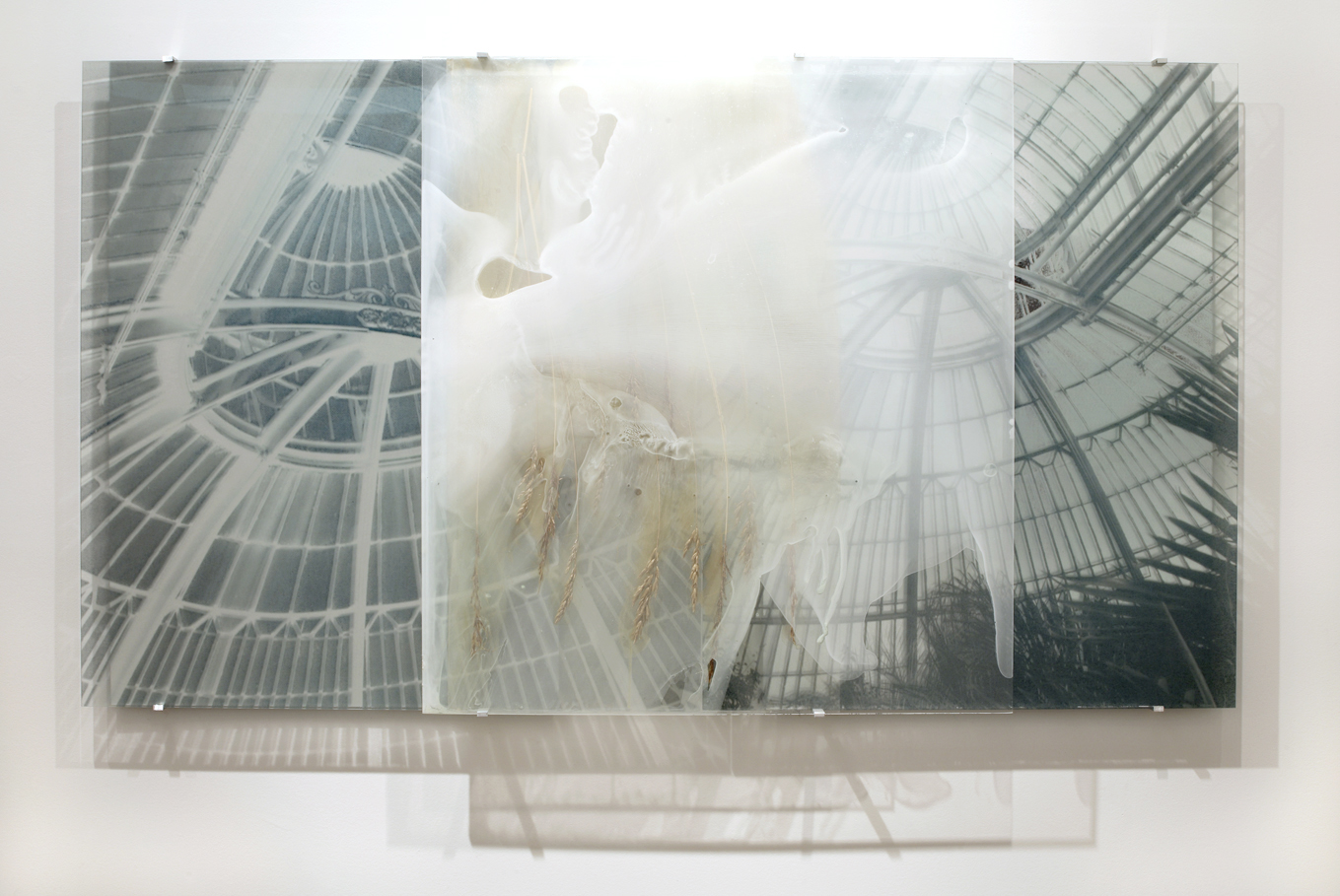 JANET LAURENCE    Botanical Residues (After Nature)    2006   Duraclear on Shinkolite Acrylic,alumin ium, oil pigment   180 x 100