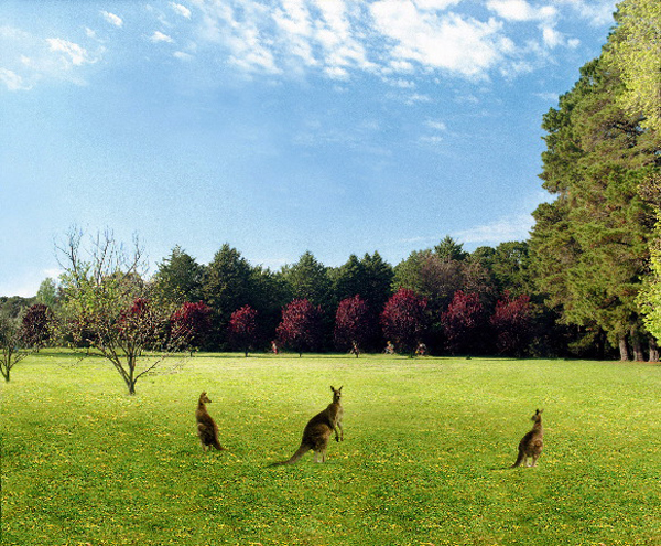 ANNE ZAHALKA     English Garden, Weston Park, Australian Capital Territory  2001-2004 Light-jet print edition of 12 115 x 145 cm