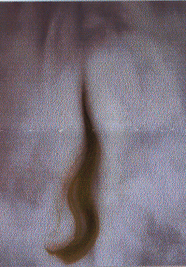 PAT BRASSINGTON    Fragments of/from Memory 22  1992 - 2002 18 x 25 cm Pigment Print edition of 4