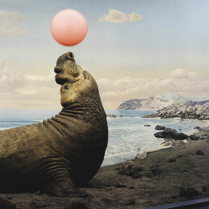 ANNE ZAHALKA     Performing Seal  2006/08 Type C photograph edition of 10   80 x 80 cm