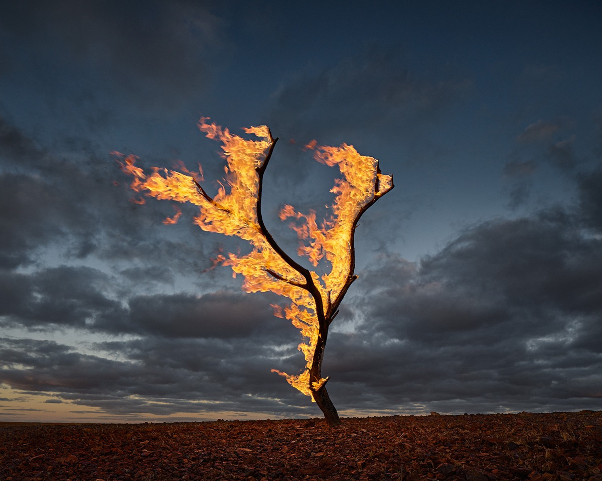 MURRAY FREDERICKS   Burning Tree Annandale Station  2015 Digital pigment print 120 x 150 cm