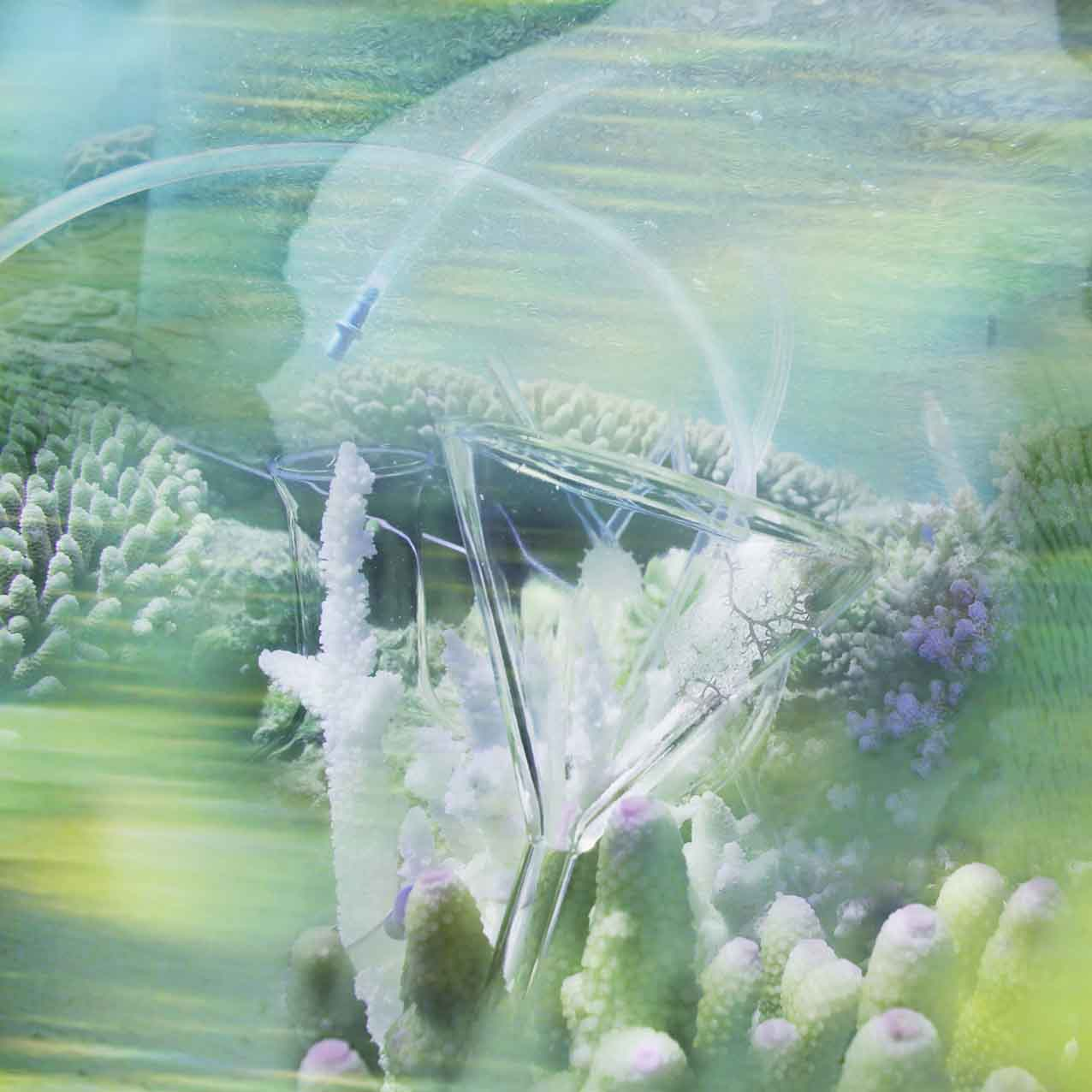JANET LAURENCE   CORAL COLLAPSE III - Reef Resuscitation  (detail) 2015 Duraclear, acrylic box 90 x 90 cm
