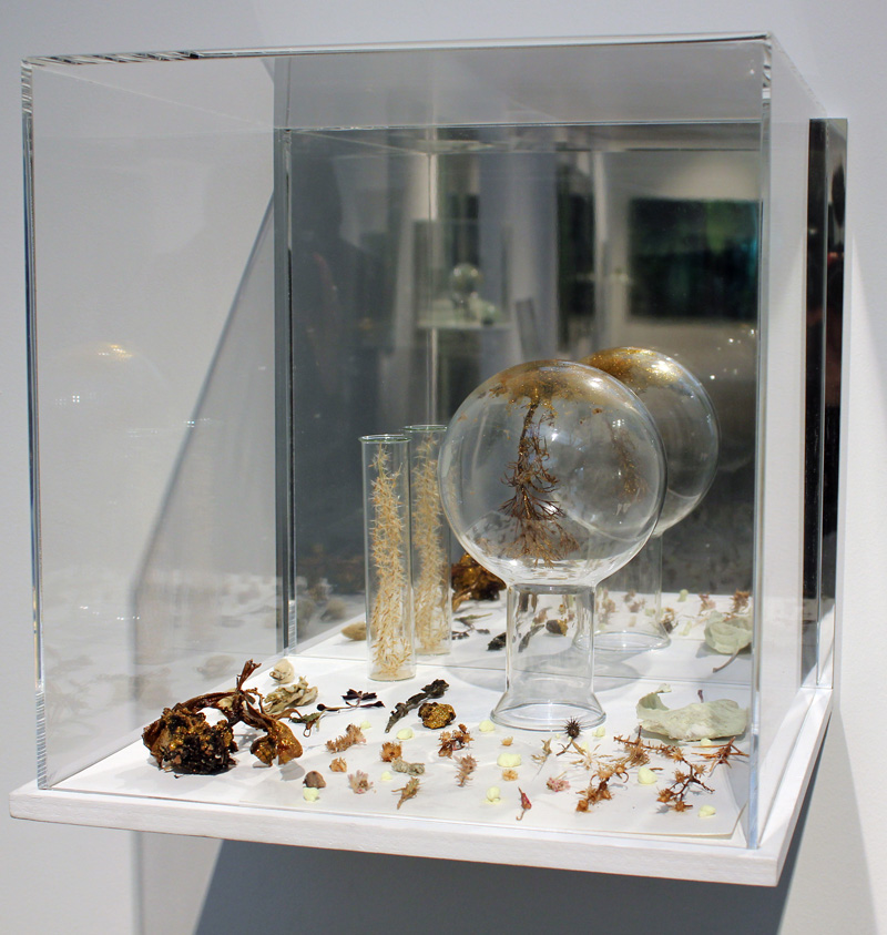 JANET LAURENCE   Habitat Re Collection  2012 Plant matter, sulphur, gold pigment, earth, acrylic, wood 35 x 36 x 33cm