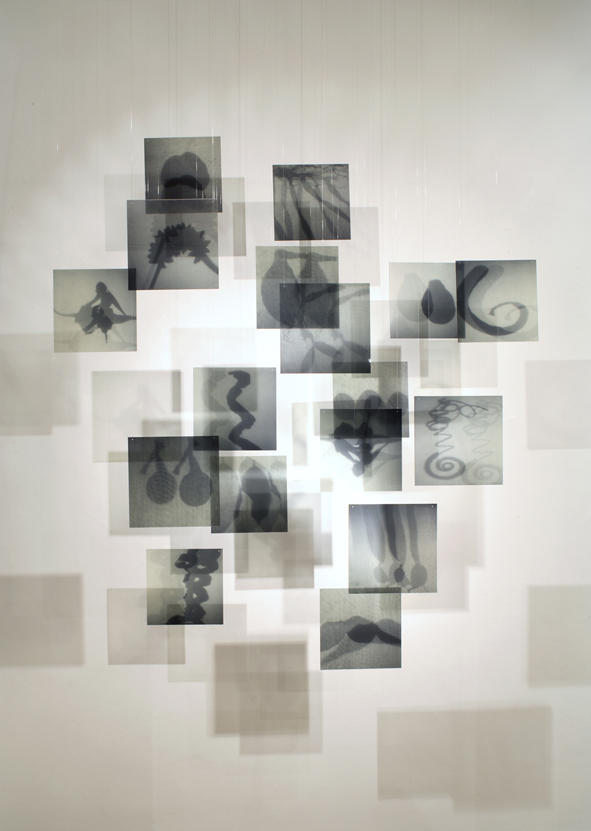 JANET LAURENCE   Spectres of Loss (Selva Seeds)  2006 Duraclear on Shinkolite Acrylic,alumin ium, oil pigment 210 x 110