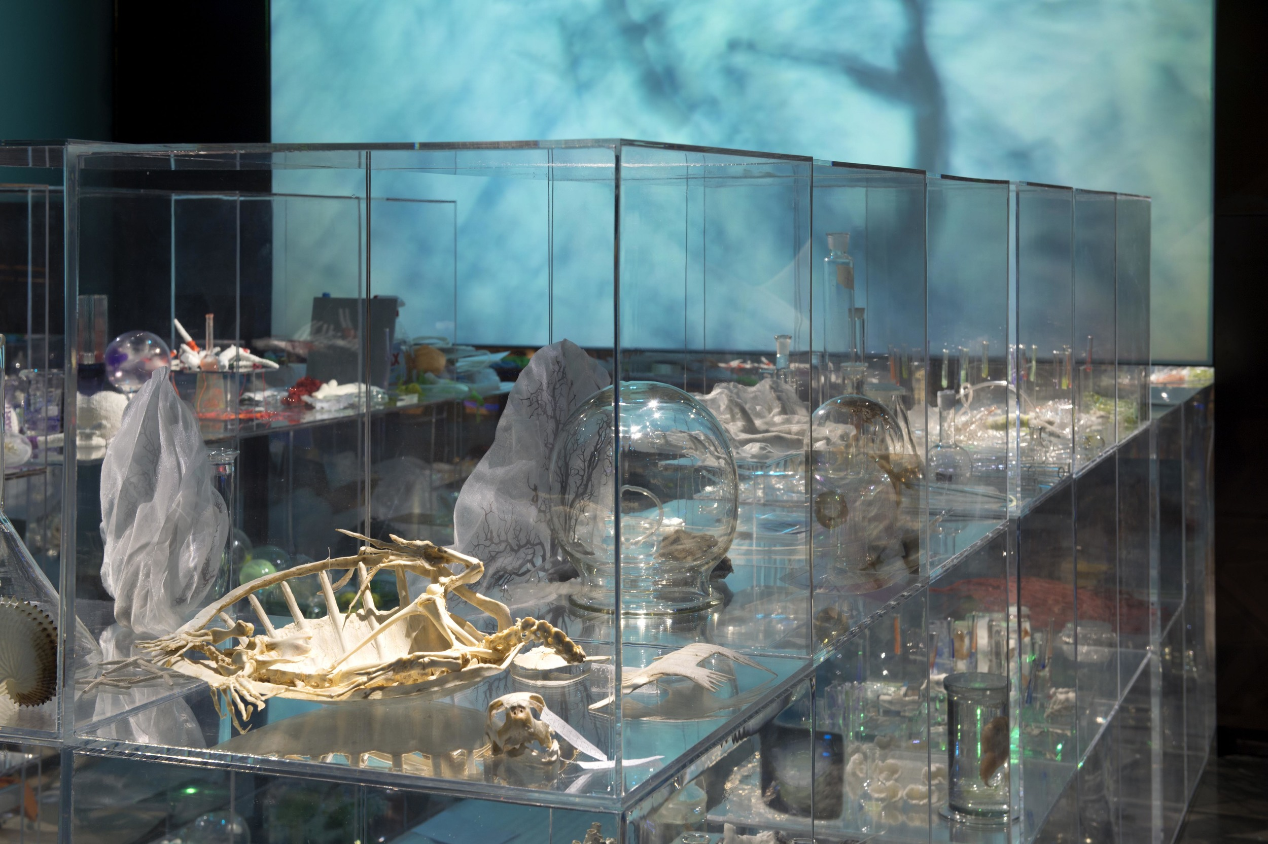 Janet Laurence,  Deep Breathing (Resuscitation for the Reef) , installation view.
