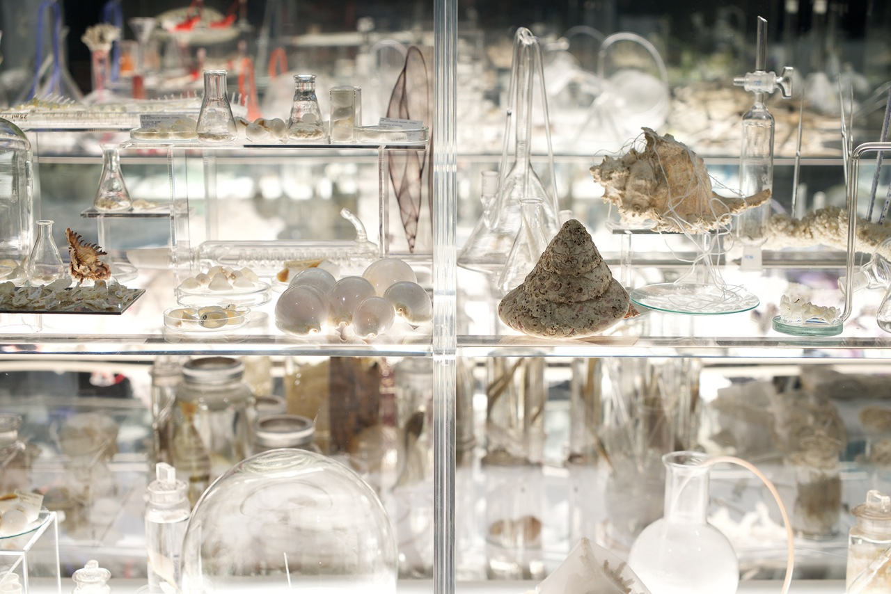Janet Laurence, Deep Breathing: Resuscitation for the Reef, Australian Museum, installation view.