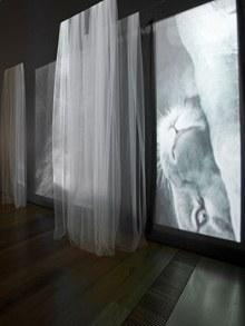 JANET LAURENCE  Vanishing  (installation view) 2009