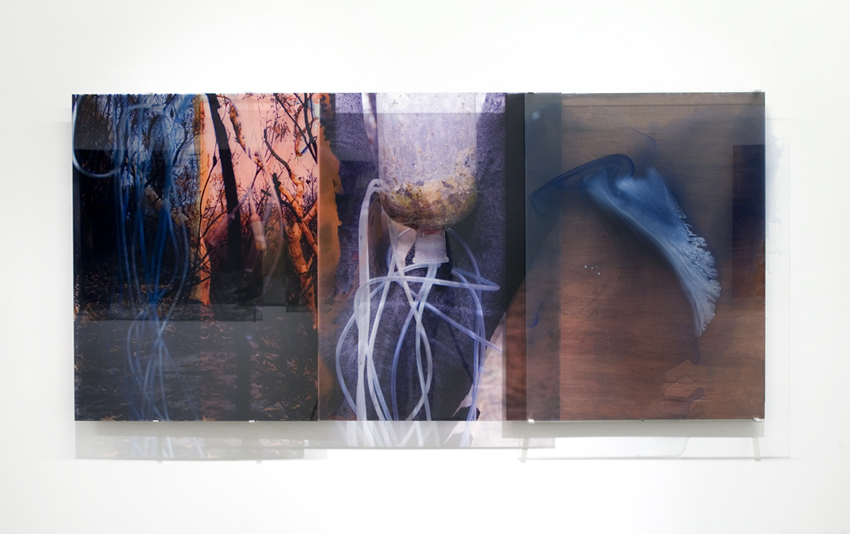 JANET LAURENCE   Transforming Carbon  2008 Duraclear, oil pigment, acrylic, oxide, shelac, wood 100 x 218 cm