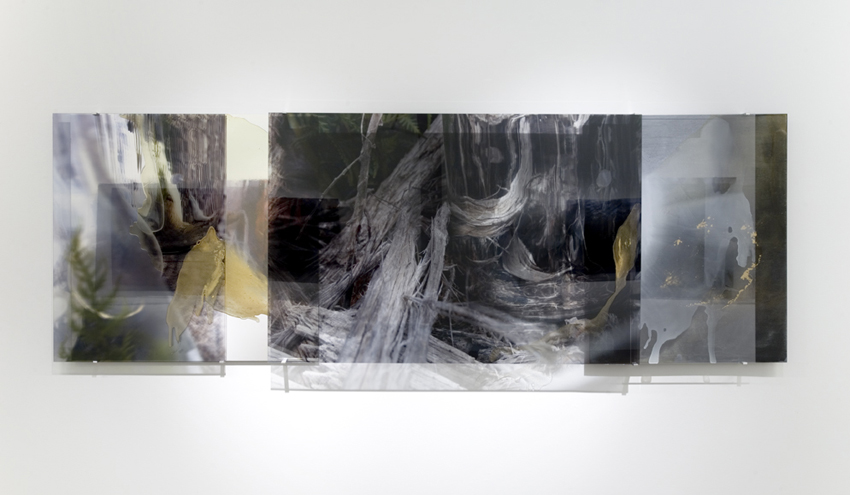 JANET LAURENCE   Broken Heart of the Wood  2008 Duraclear, gold leaf, wood, oil on acrylic 100 x 297 cm