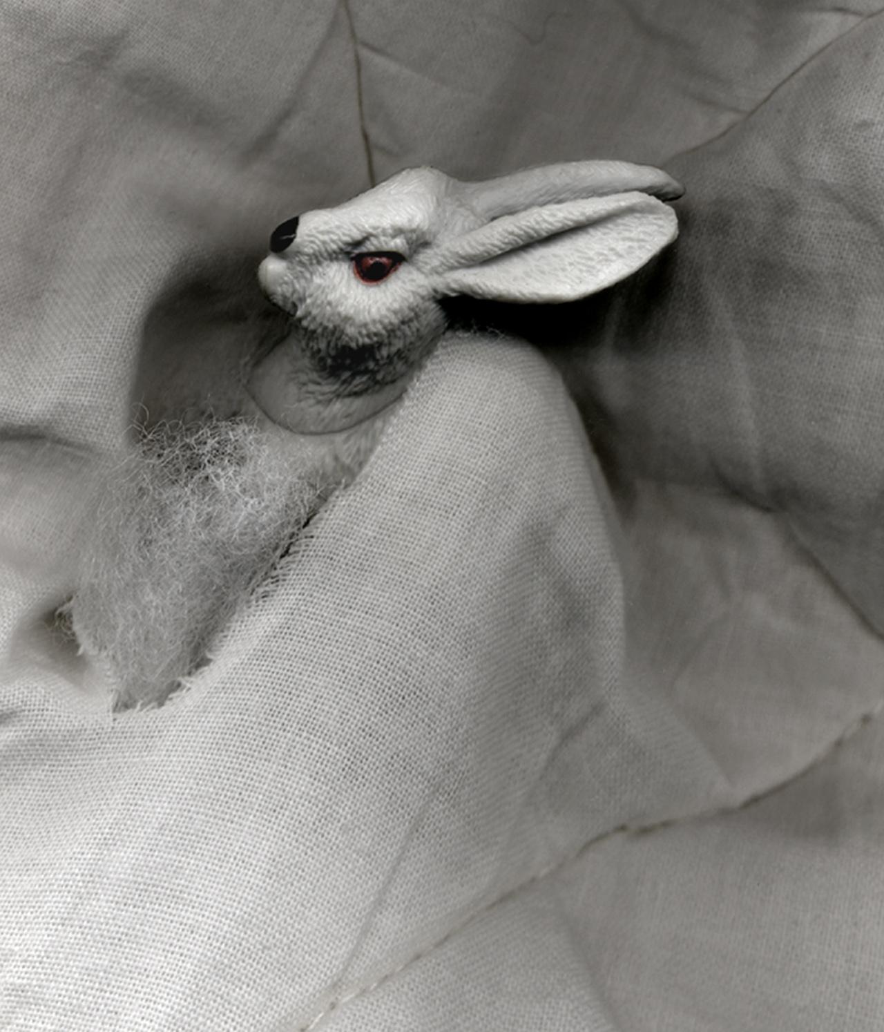 Pat Brassington,  The Permissions #4 , 2013, pigment print, 21 x 18cm.