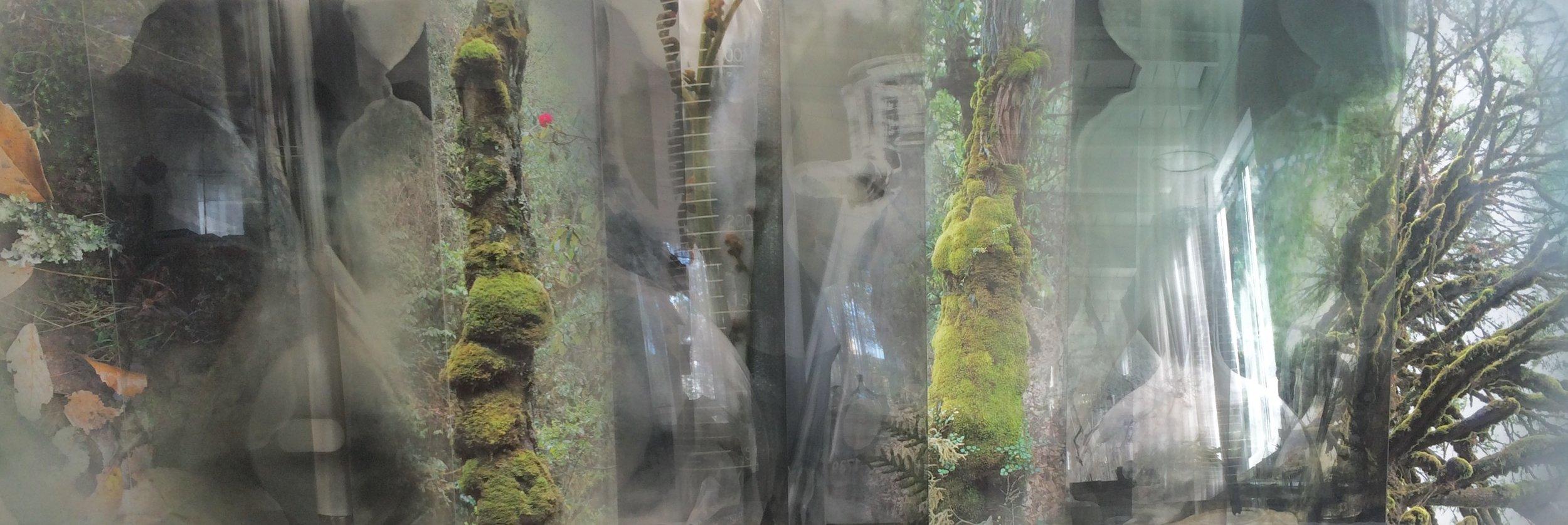 JANET LAURENCE   Chlorophyll Collapse - Collecting  2017 Dye-Sublimation prints on aluminium, Duraclear on Shinkolite Acrylic  100 x 306.5 cm