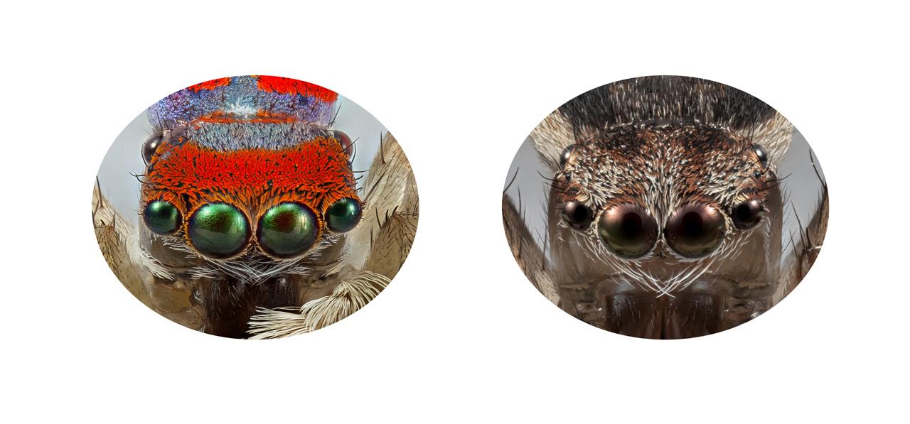 MARIA FERNANDA CARDOSO   Eye Contact II   2018 Pigment print on 310g photo paper 1/3 46.6 x 100cm