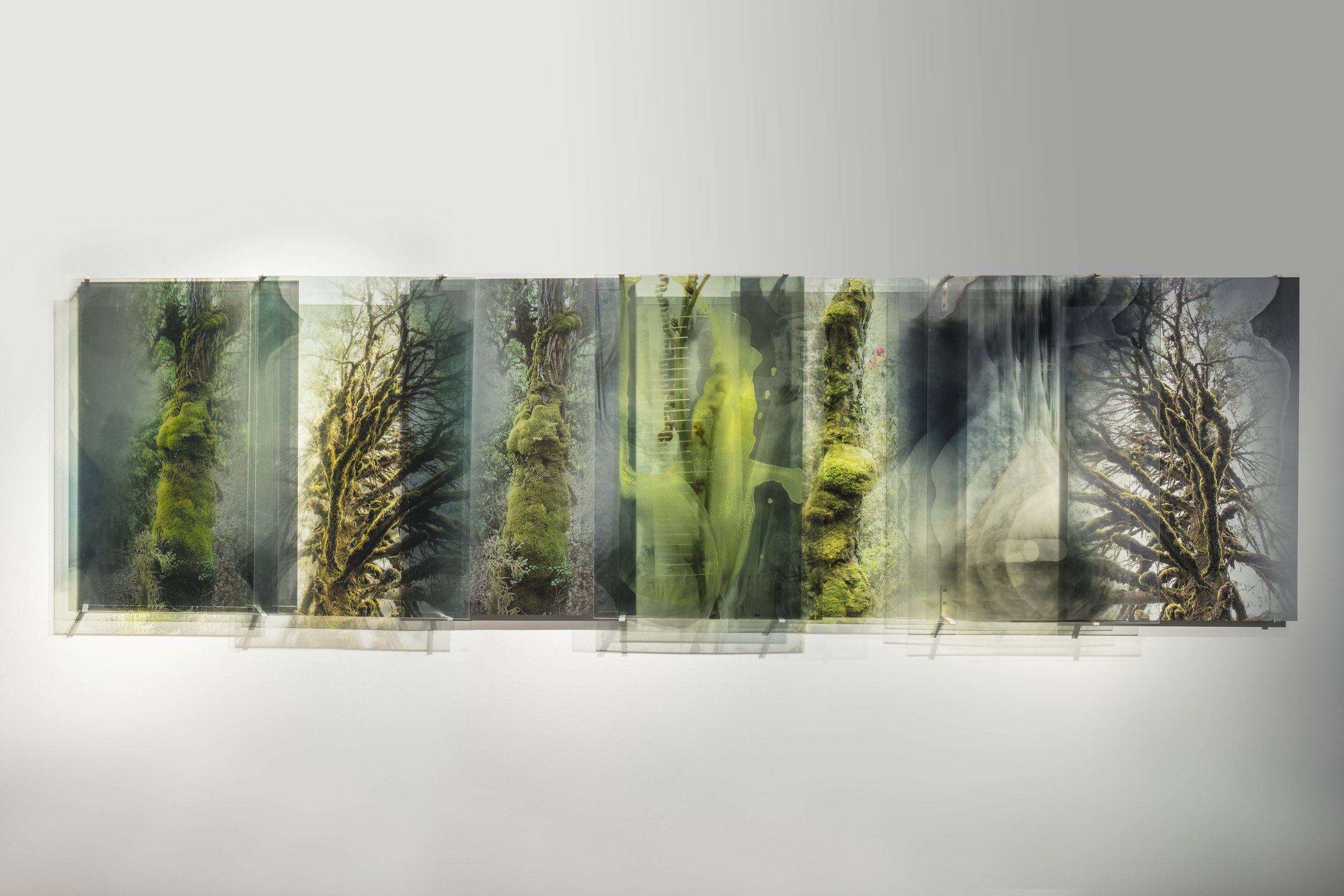 JANET LAURENCE   Sacred Green,  from the series  Chlorophyll Collapse.   2018 Diabond mirror, dye sublimation archival print onto Chromaluxe aluminium and C type silver halide print on clear polyester  and oil glaze on acrylic 100 x 370 cm