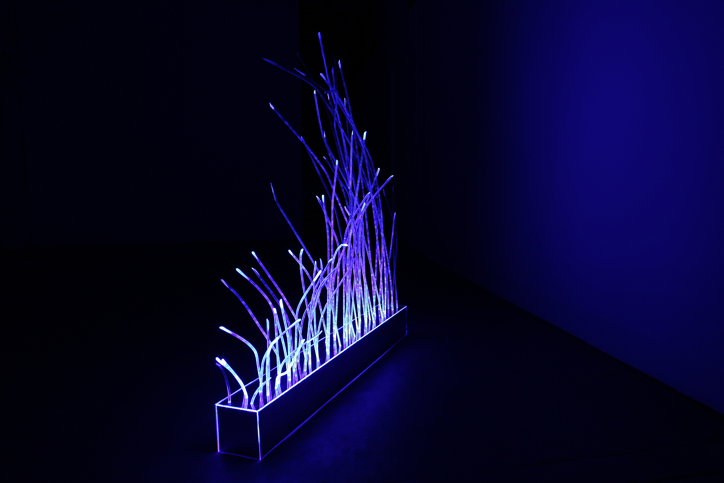 Tracy Sarroff,  Cyber Plant – Blue , 2012, acrylic, fluorescent light, 14 x 14 x 127cm.
