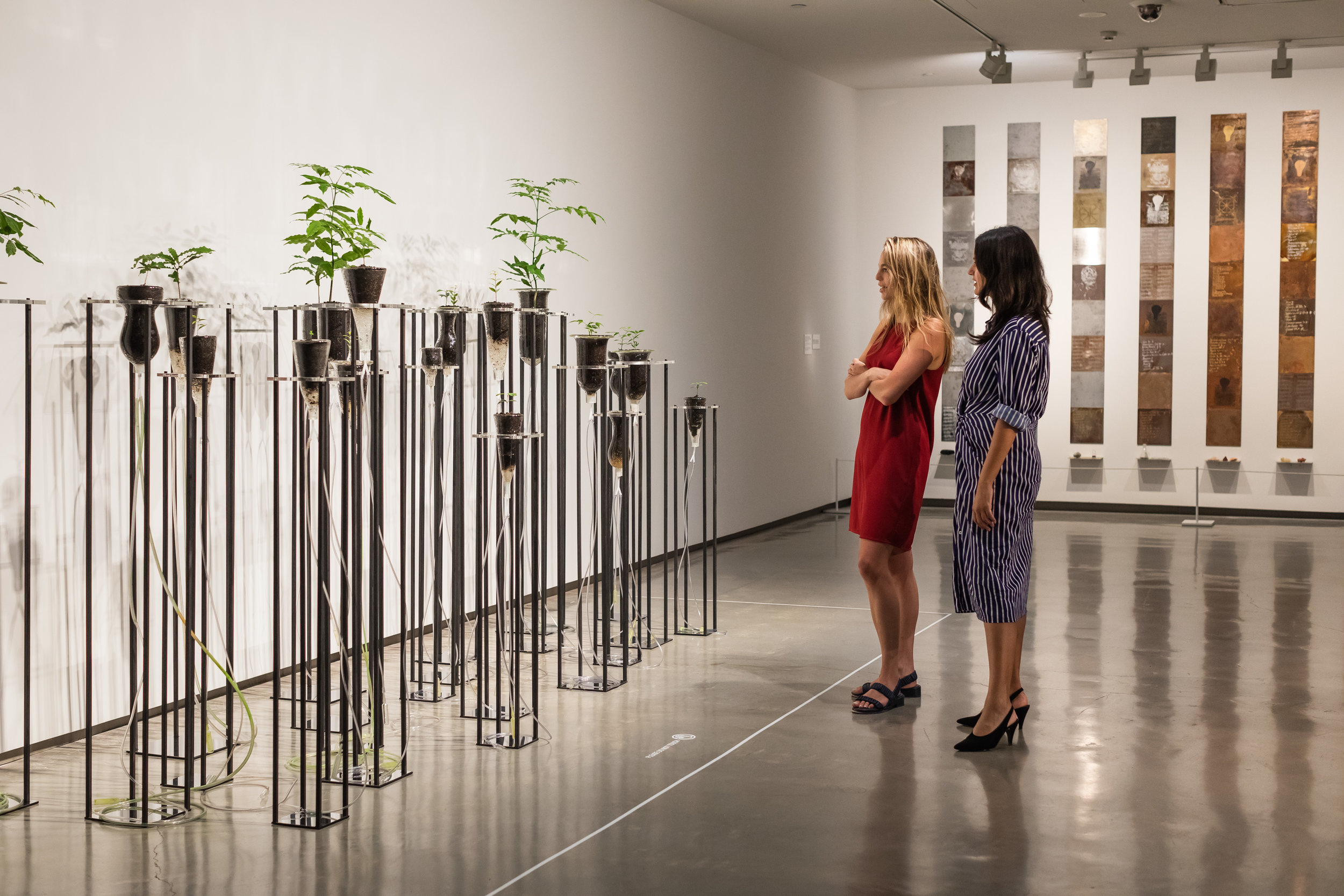 Cellular Gardens (Where Breathing Begins) , 2005, installation view,  Janet Laurence: After Nature , Museum of Contemporary Art Australia, Sydney, 2019, photograph: Jacquie Manning