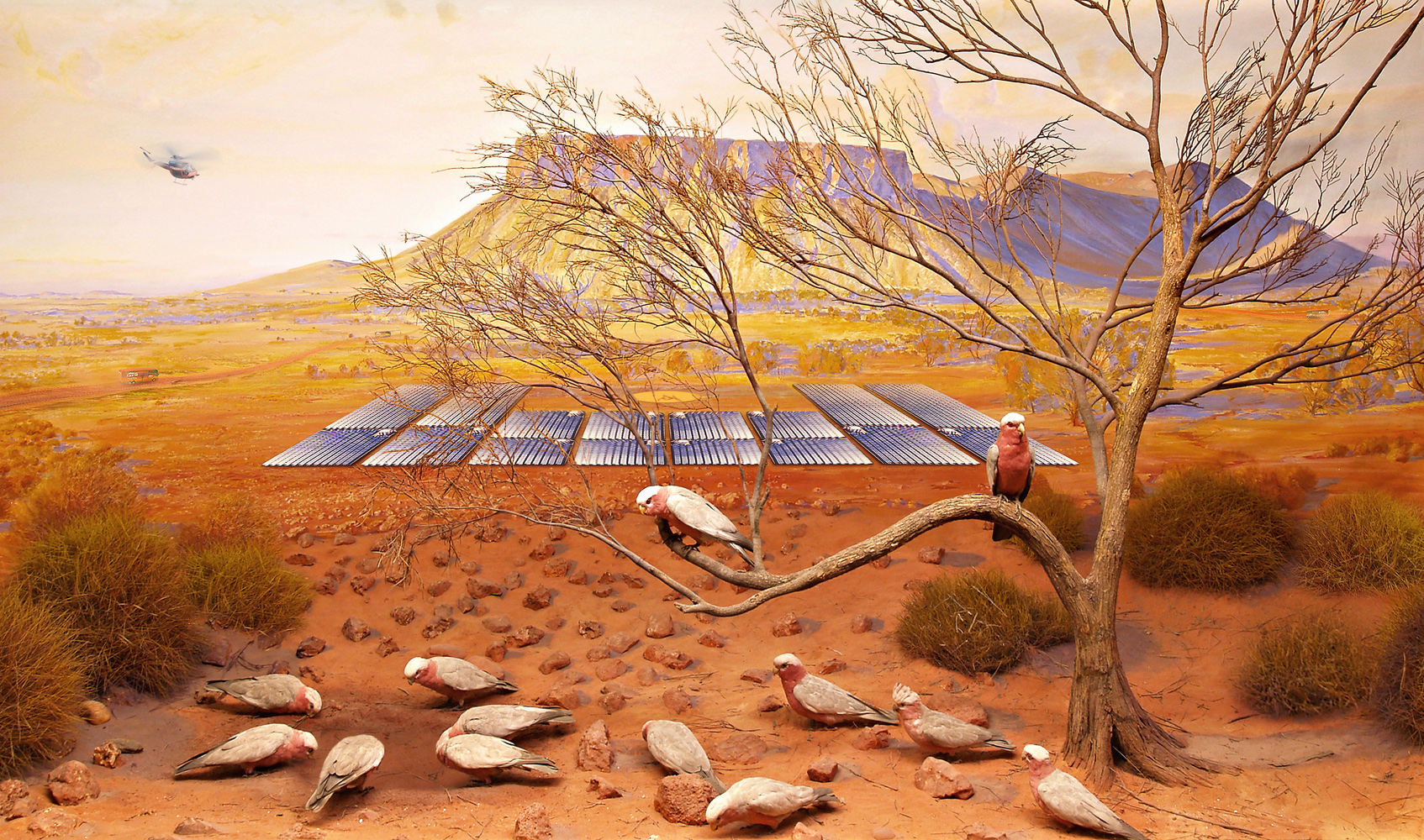 ANNE ZAHALKA   Galah, Mt Connor near Uluru, South Australia  2019 Archival pigment ink on rag paper 80 cm x 135 cm Edition of 6  Source: South Australia Museum