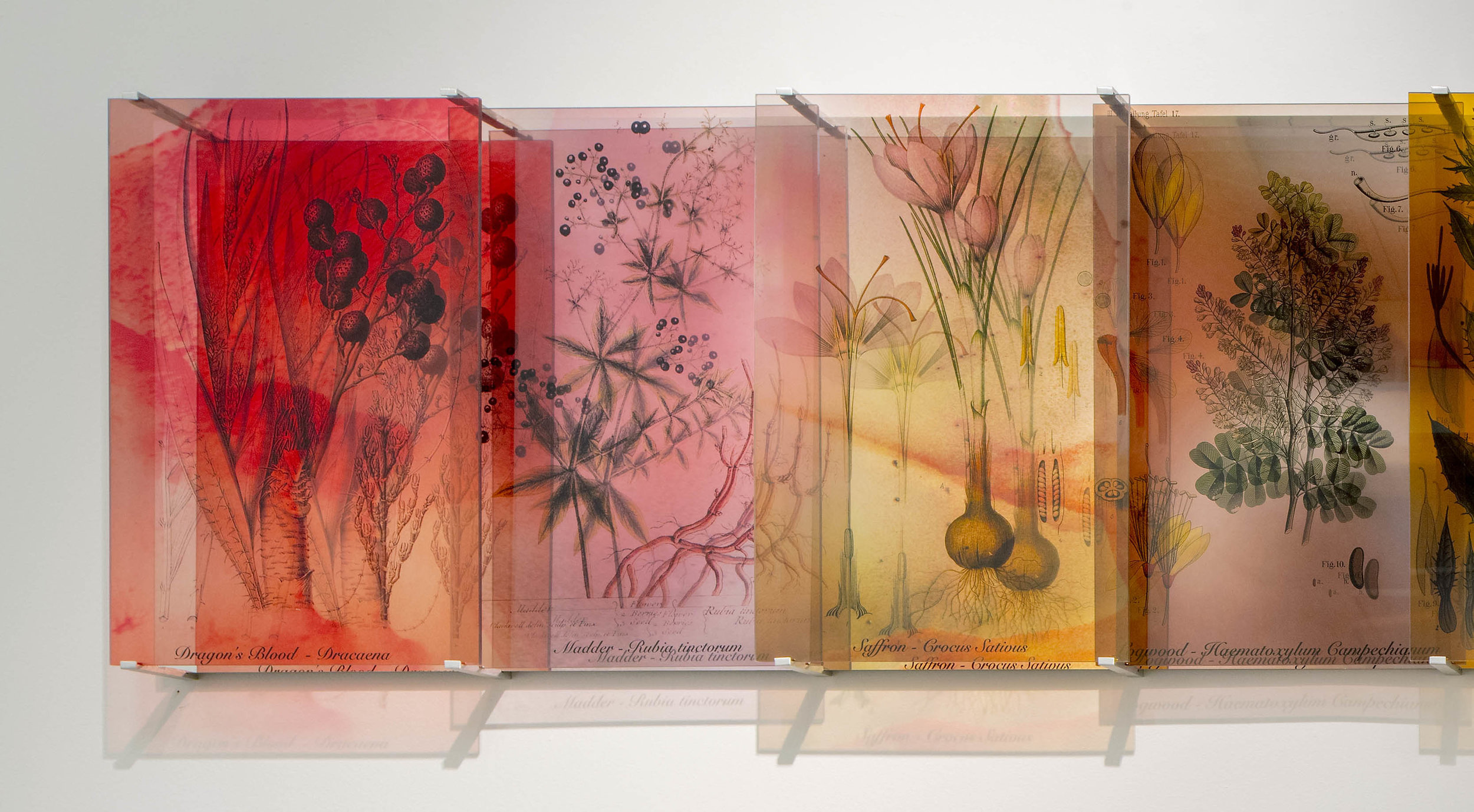 JANET LAURENCE   Plants Bleed Lakes,  panels 1 - 4 2018 Dibond mirror, duraclear mounted on acrylic 60 x 144 cm Part of a series of 3