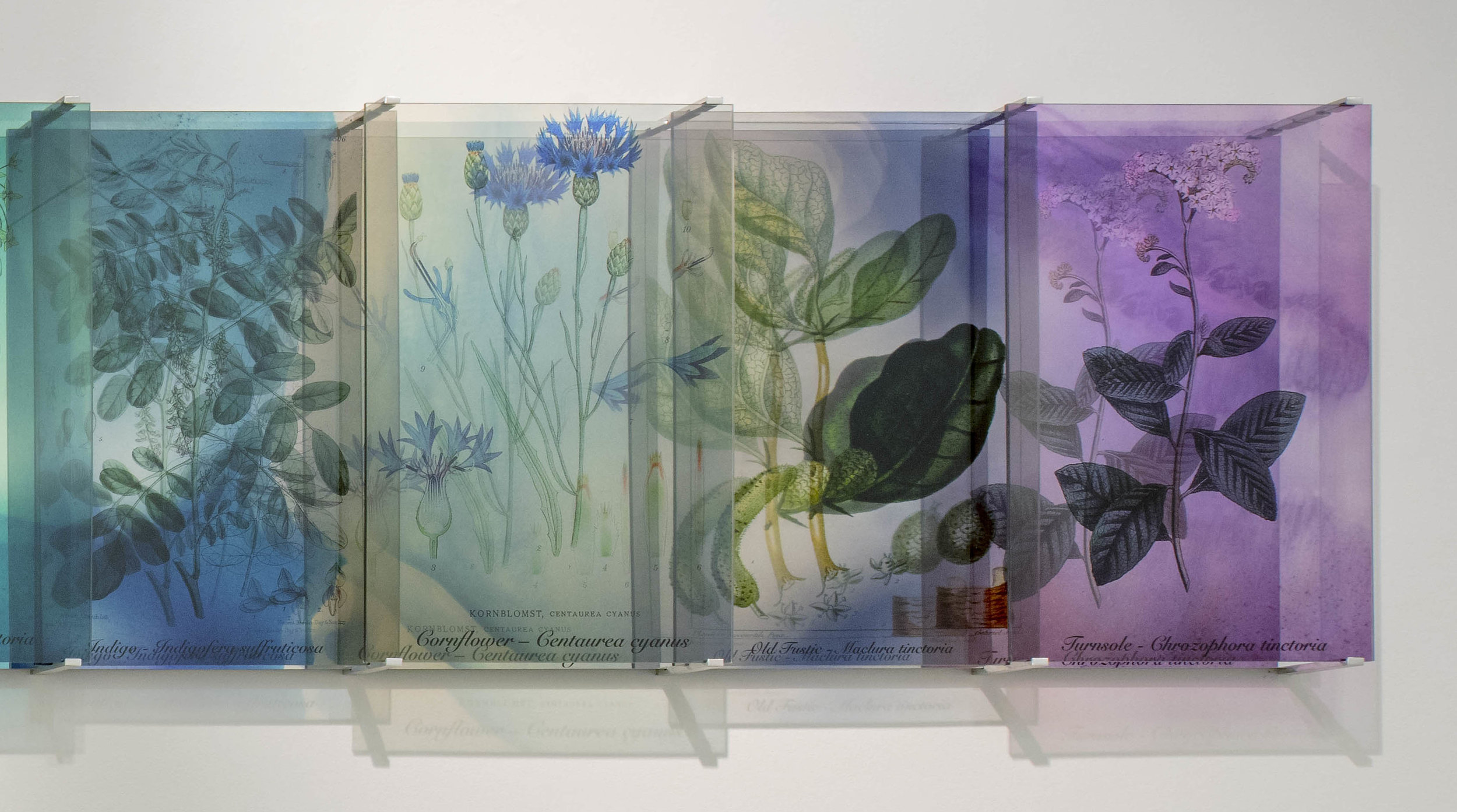 JANET LAURENCE   Plants Bleed Lakes,  panels 10 - 13 2018 Dibond mirror, duraclear mounted on acrylic 60 x 144 cm Part of a series of 3