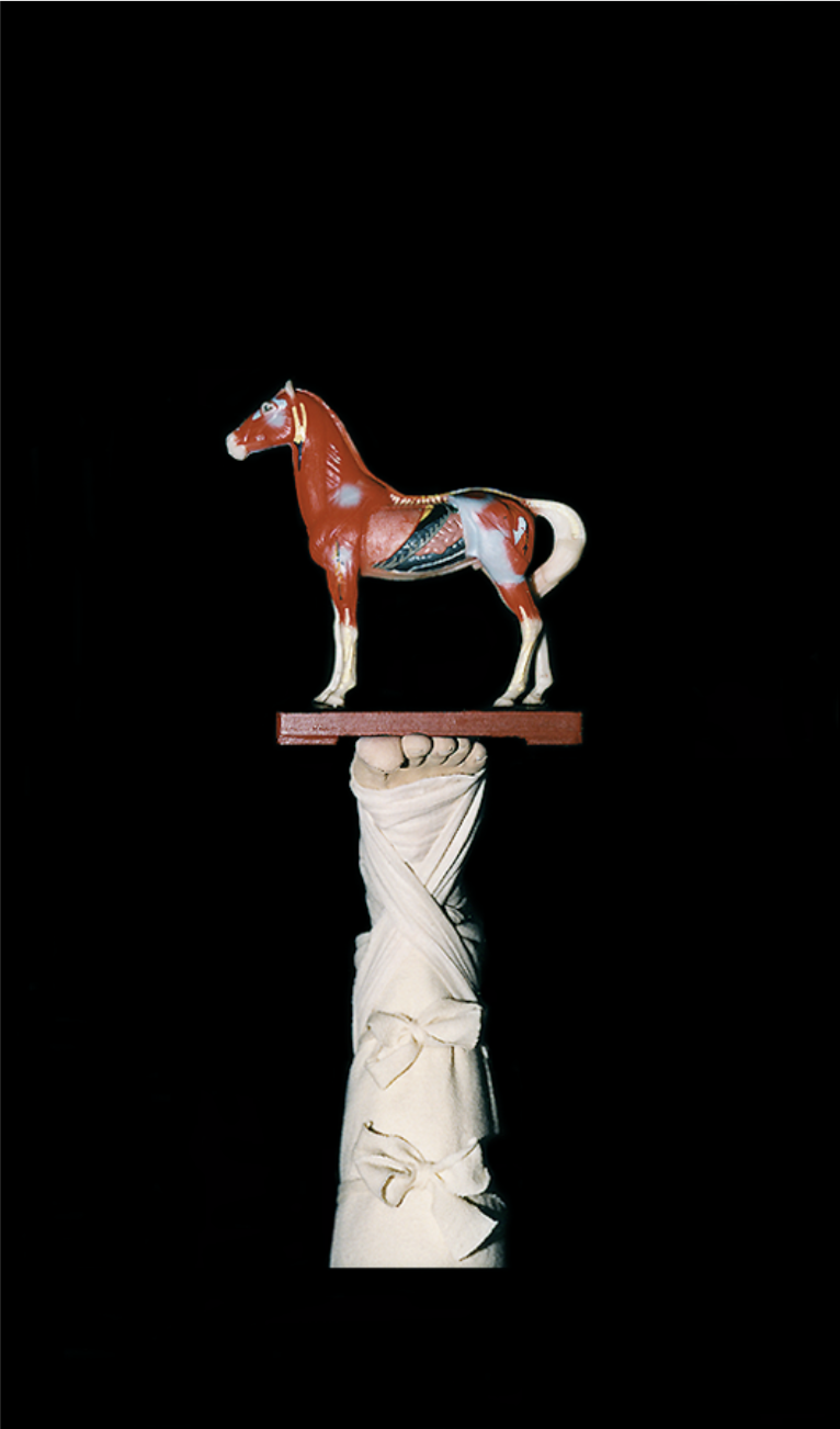 ROSE FARRELL & GEORGE PARKIN   Anatomical Horse  from the series  A Thousand Golden Remedies  2000 Type C Photograph 103.5 x 66.5 cm