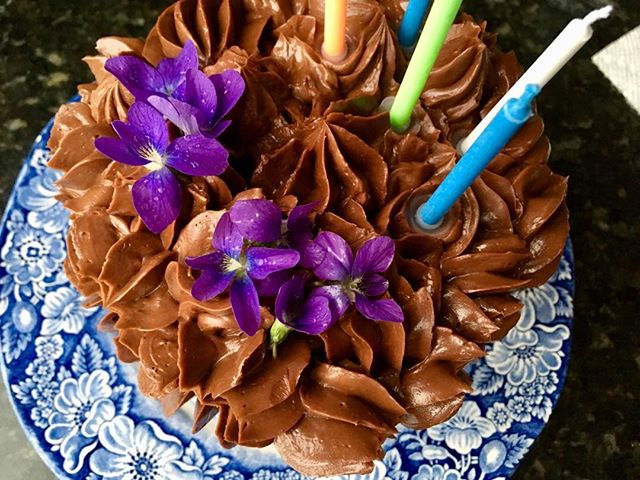 Rain-soaked violets from our yard on Figaro's 5th birthday cake—gluten-free/grain-free chocolate with butter frosting. #oliverwestonco #chefhannahspringer #healthybirthdaycake #violets