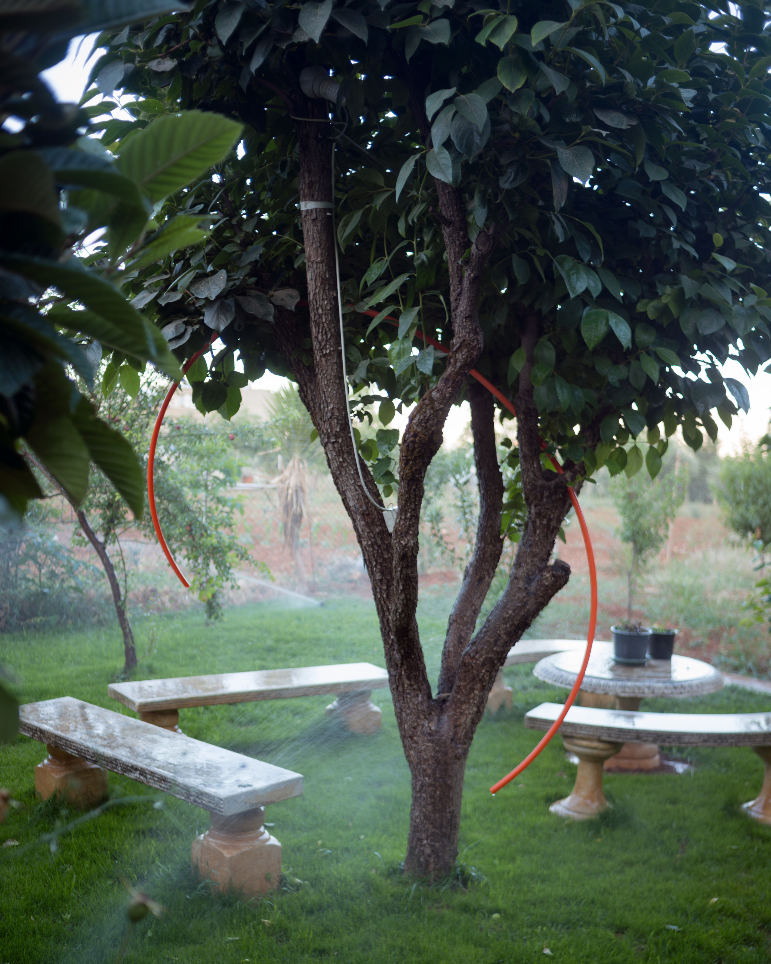 treehoop.jpg