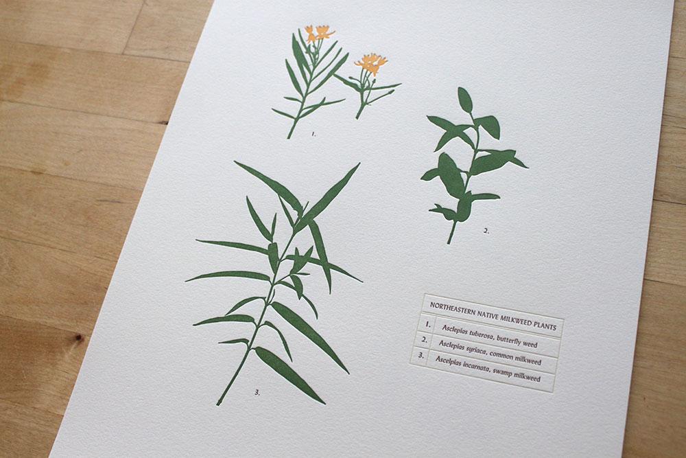 Monarch-milkweed.jpg